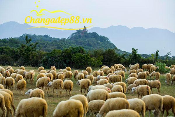 Chăn Lông Cừu - Xanh Thiên Thảo