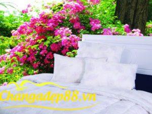 RUỘT GỐI FLOWER KORE